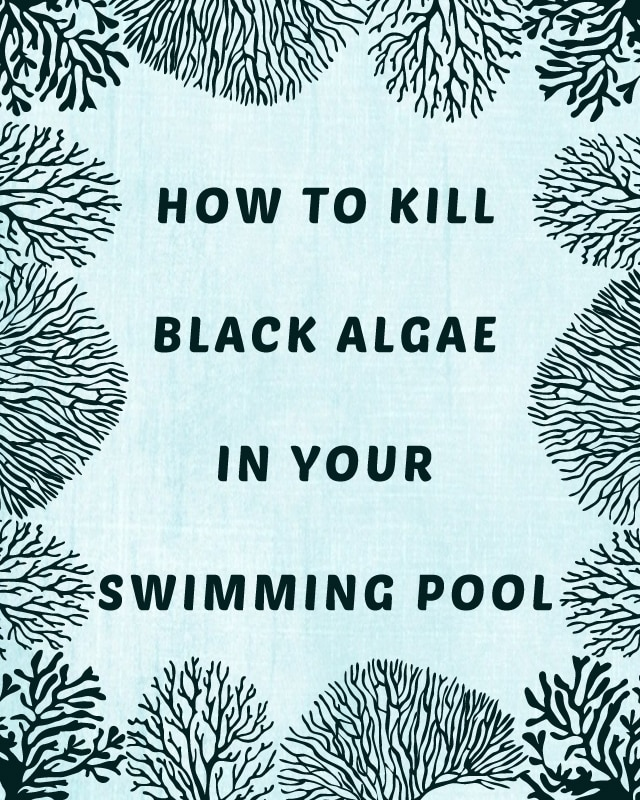 How to kill black algae in your swimming pool How to prevent algae in swimming pool